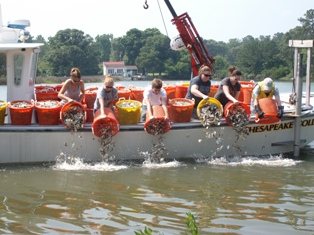 Transplanting recycled shells_Chesapeake Bay Foundation.jpg