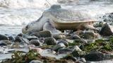 Sea Turtle Release 07-30-2008 088-small.jpg