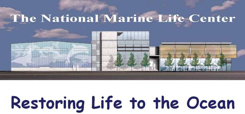 New building restoringlife to the ocean.jpg