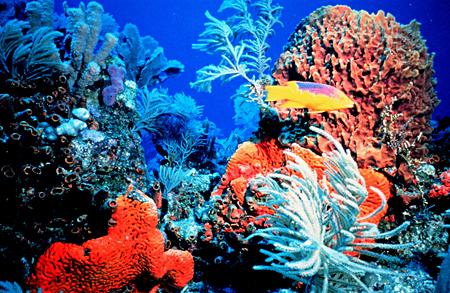 Keys Coral Reef