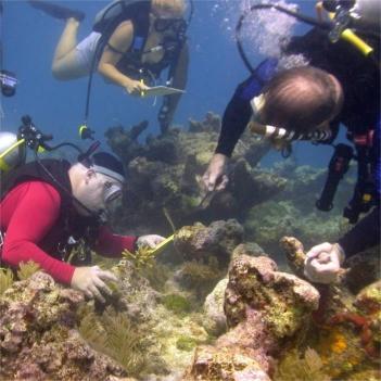 Coral Restoration Foundation Workshops