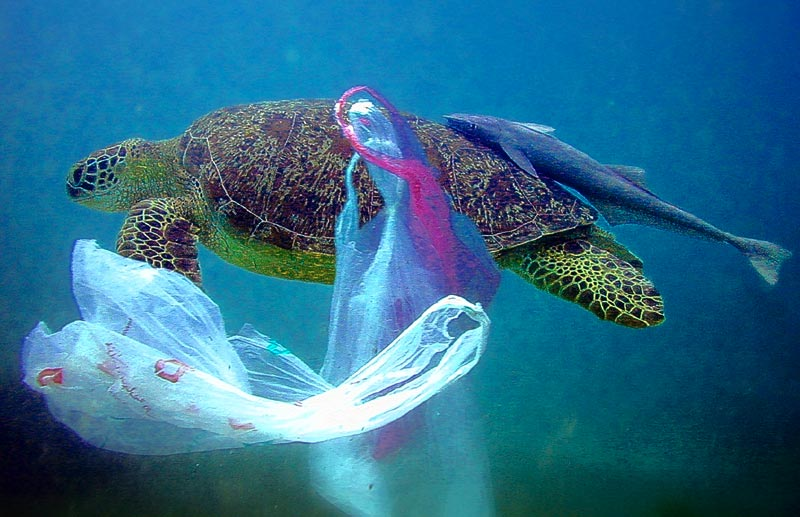 Plastic Bags in Our Oceans