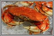 3629Pdungeness-crab.jpg
