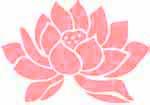 lotus bullet book.jpg