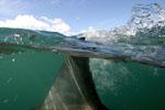 Shark Fin LR.jpg
