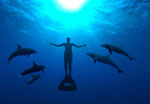 The Cove Dolphins LR.jpg